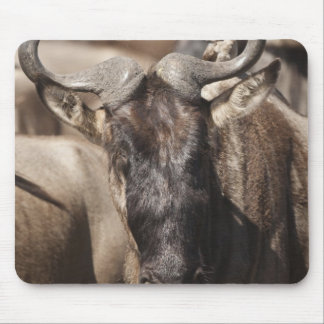 White-bearded Wildebeest with Wattled Starling Mouse Mat