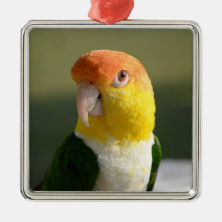 White Bellied Caique Parrot Christmas Tree Ornament