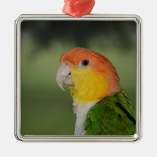 White Bellied Caique Parrot Christmas Ornament