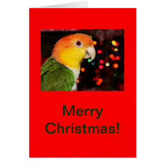 White Bellied Caique Parrot Merry Christmas Card
