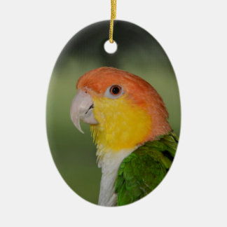White Bellied Caique Parrot Outdoors Ceramic Oval Decoration