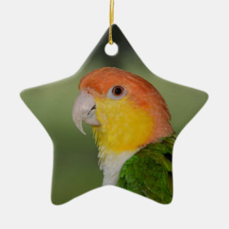 White Bellied Caique Parrot Outdoors Ceramic Star Decoration