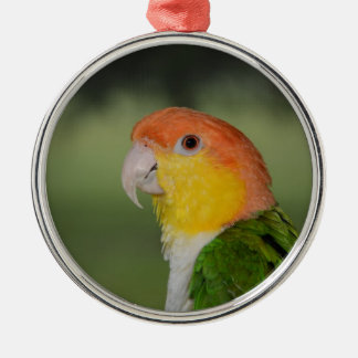 White Bellied Caique Parrot Outdoors Silver-Colored Round Decoration