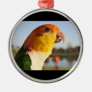 White Bellied Caique Parrot Silver-Colored Round Decoration
