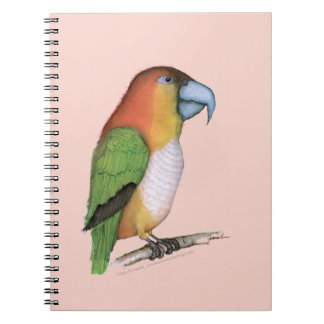 white bellied caique.tif notebook