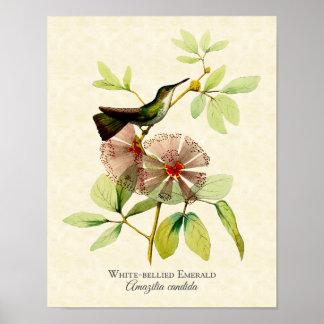 White Bellied Emerald Hummingbird Art Print