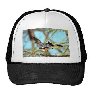 White-bellied Go Away Bird Mesh Hat