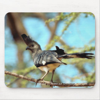 White-bellied Go Away Bird Mouse Pads