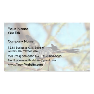 White-bellied Go Away Bird Pack Of Standard Business Cards