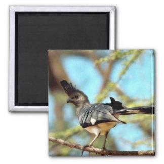 White-bellied Go Away Bird Refrigerator Magnet