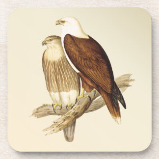 White Bellied Sea Eagle Painting Beverage Coasters