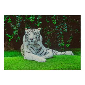White bengal tiger 13 cm x 18 cm invitation card