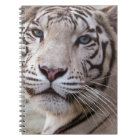 White Bengal Tiger Notebook