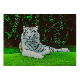 White bengal tiger pack of chubby business cards