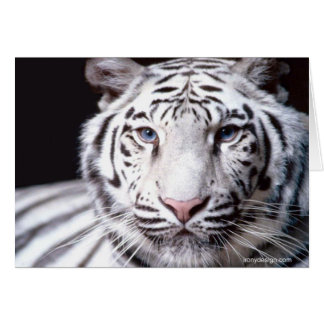 White Bengal Tiger Photography Card