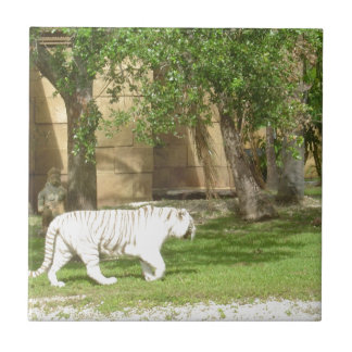 White Bengal Tiger Small Square Tile