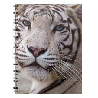 White Bengal Tiger Spiral Note Book