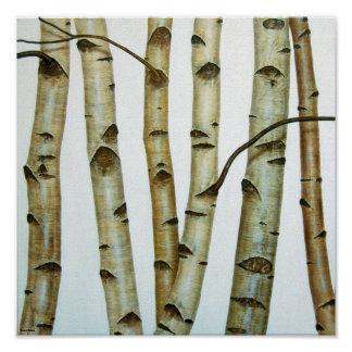 White birches poster