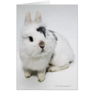 White, black and brown rabbit greeting card