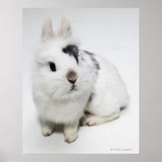 White black and brown rabbit print