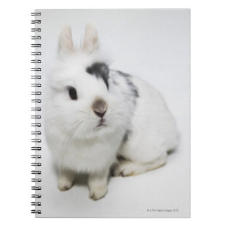 White, black and brown rabbit spiral notebook