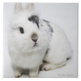White, black and brown rabbit tile