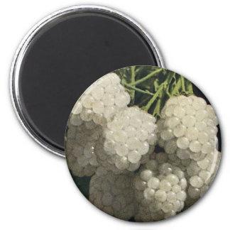 White Blackberry 6 Cm Round Magnet