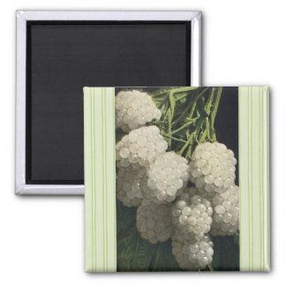 White Blackberry Magnet