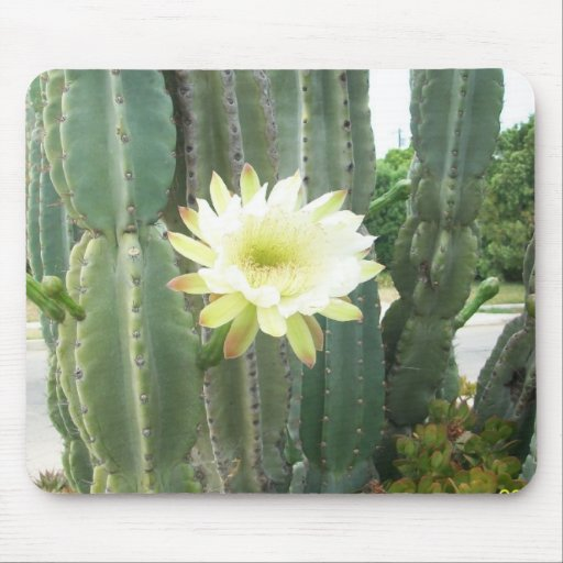 White Bloom On Cactus Mousepads
