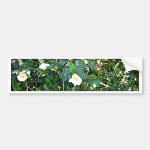 White Blooms Bumper Sticker