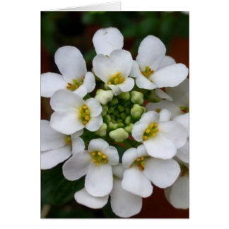 White Blossom Cluster Blank Greeting Card