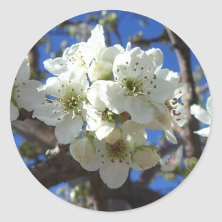 White Blossom Clusters Spring Flowering Pear Tree Round Sticker