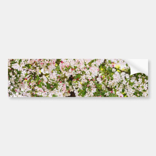 White Blossoms, Flower Floral Photography Bumper Stickers