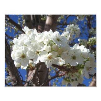 White Blossoms Spring Photo Print