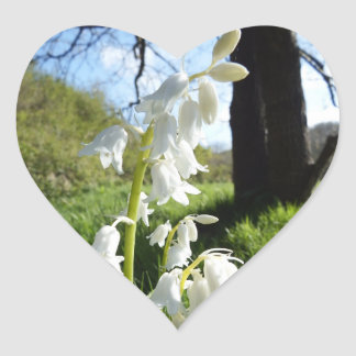 White Bluebells Stickers