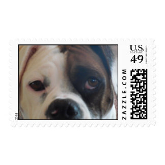 White Boxer Daisy Belle Sweet Pet Dog Stamps