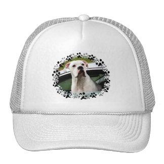 White Boxer in a Car Trucker Hat