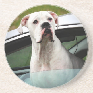 White Boxer in a Car Drink Coasters