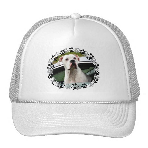 White Boxer in a Car Hat