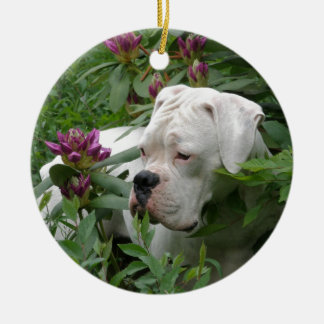 White Boxer in Pink Rhodies Christmas Ornament