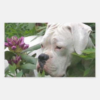 White Boxer in Pink Rhodies Rectangular Sticker