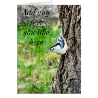 White Breasted Nuthatch Card