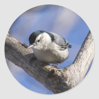 White-breasted Nuthatch Classic Round Sticker
