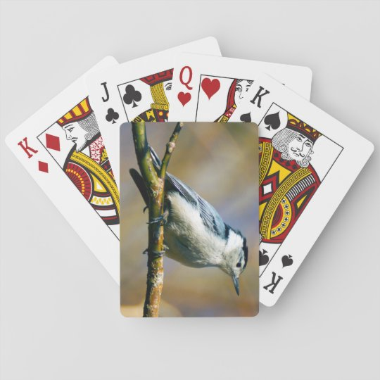 White-Breasted Nuthatch Playing Cards