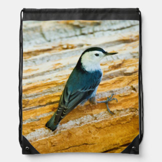 White-Breasted Nuthatch (Sitta Carolinensis) Backpacks