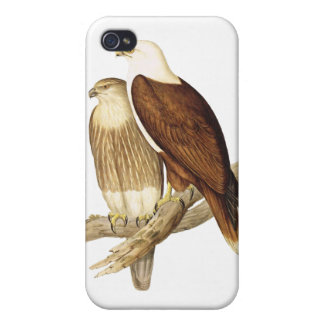White Breasted Sea Eagle. Large Bird of Prey. iPhone 4 Cases