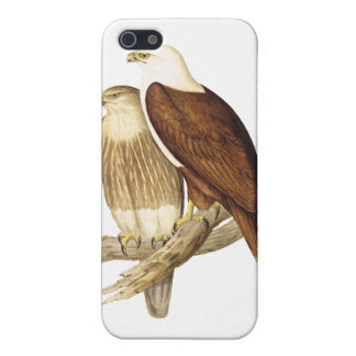 White Breasted Sea Eagle. Large Bird of Prey. iPhone 5 Cases