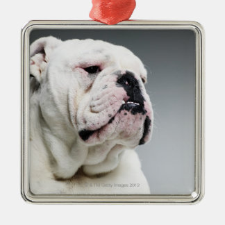 White Bull dog Christmas Ornament
