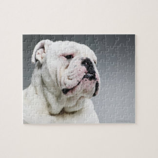 White Bull dog Jigsaw Puzzle