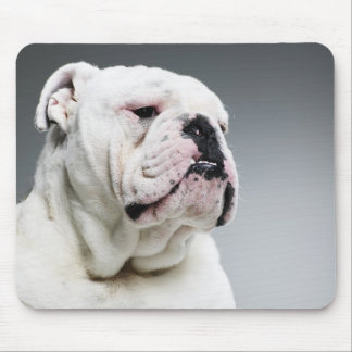 White Bull dog Mouse Pad